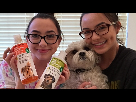 Giving Our Dog a Bath - Merrell Twins