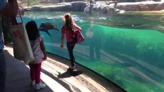 فيديو رائع لـ فتاة تستخدم لغة الإشارة لكي تلهو مع أسد البحر