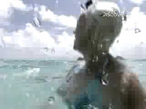 Shark Week Tiger Shark Attack Beyond Fear
