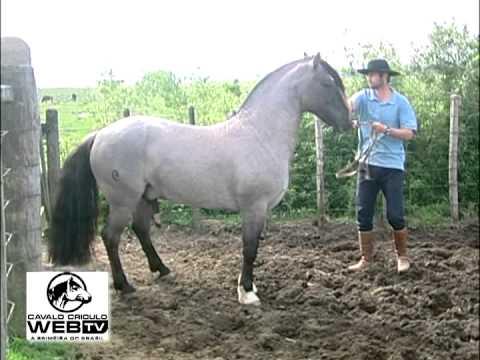 cavalo crioulos web tv