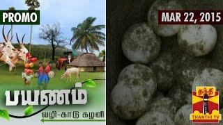"""Payanam 22-03-2015 """"Dry Fish"""" Sale, Marine Resources in Kannagi Soil, Poompuhar – Thanthi tv show"""