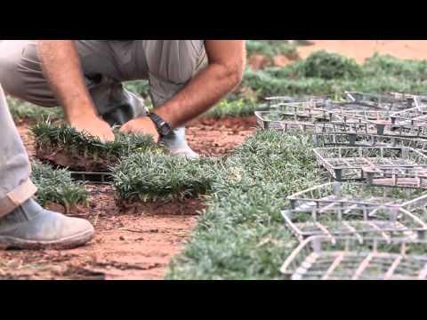 Famílias de Joinville cultivam flores e plantas ornamentais