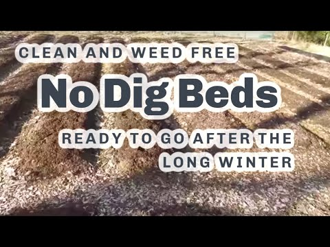 No Dig beds after winter at 59°N