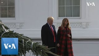 White House Christmas Tree Arrives - VOAVIDEO