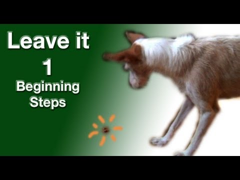 Leave it 1- the most important things to train- clicker dog training