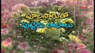 పులాసాగుతో అధిక లాభాలు : Flower Farmers facing Problems With Brokers due to Low Price | Raithe Raju - CVRNEWSOFFICIAL