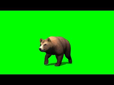 brown bear walk - green screen effects