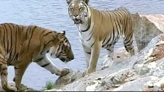 Bandipur tiger reserve: The beauty & the beast - NDTVINDIA