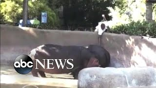 LAPD searches for man seen spanking a hippo at the zoo - ABCNEWS