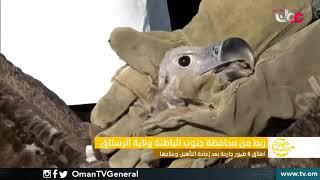 ربط مباشر من محافظة جنوب الباطنة ولاية الرستاق | إطلاق 8 طيور جارحة بعد إعادة التأهيل وعلاجها