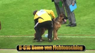 2010 SV BSZS NKGR part 8 Remo von Fichtenschlag