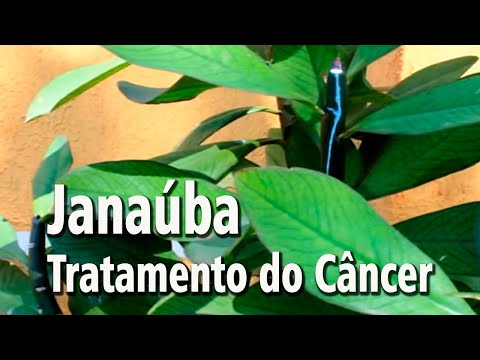 Janaúba - Planta no Tratamento do Câncer