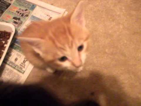 all kittens eating solid food 060413