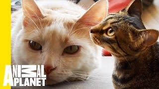 Mauhaus Cat Café Is A Cat Lover's Paradise! - ANIMALPLANETTV
