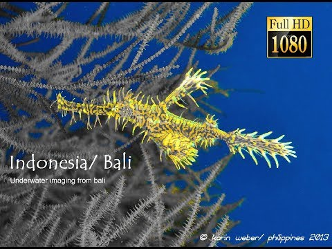Indonesia/ Bali - Underwater imaging from bali by johannes weber (HD)