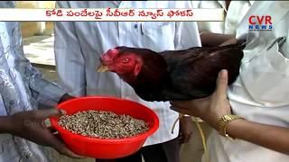 CVR News Focus: కోడి పందేలు | Sankranthi Festival Special in Andhra Pradesh | CVR NEWS - CVRNEWSOFFICIAL