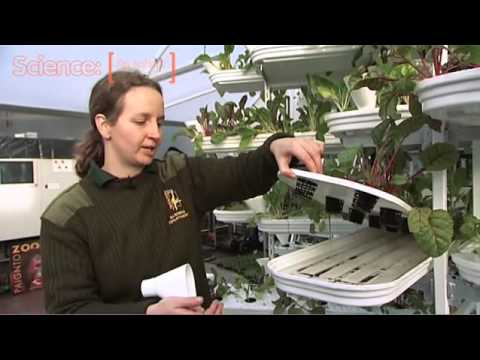 Hidroponia Vertical Hi-Tech (Para Alimentação para Macacos)