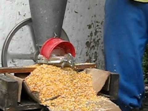 Molienda de maíz para pollos de engorde