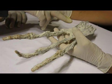 Mysterious GIANT 'Alien Claw' & Warped Skull Found Beneath Desert in Peru