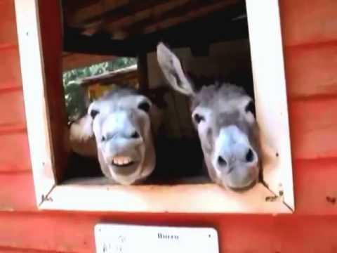 TOP 10 - Os animais mais engraçados da Internet