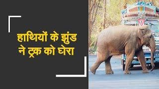 Watch: Elephants surrounded Truck in forest | हाथियों के झुंड ने ट्रक को घेरा - ZEENEWS