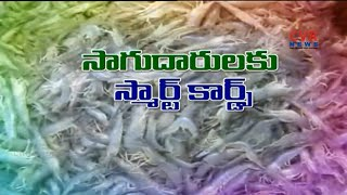 రొయ్యలకు భారీ డిమాండ్ : రొయ్యల సాగు రైతులకు స్మార్ట్ కార్డులు : Shrimp Farming | Raithe Raju - CVRNEWSOFFICIAL