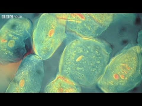 How did the Evolution of Complex Life on Earth Begin? - The Gene Code, Episode 1