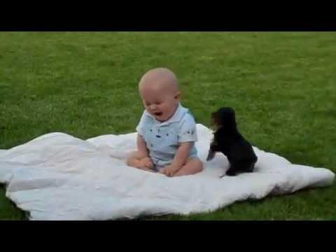 Bebin najbolji prijatelj