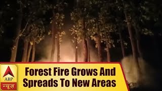 Uttarakhand: Forest fire grows and spreads to new areas - ABPNEWSTV