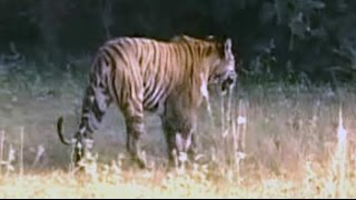 Celebrate World Tiger Day with us - NDTV