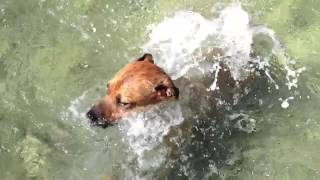 [Dog Diving] Video