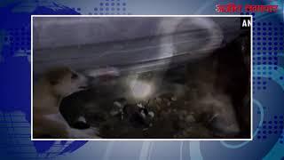 video : मां तुझे सलाम..कोबरा से कुत्तिया का संघर्ष