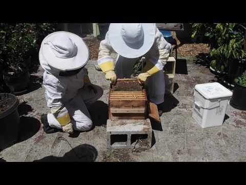 warre honey harvest