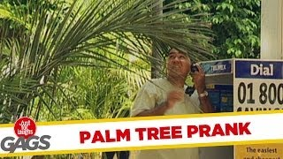 Just for laughs gags - Annoying Palm Tree Gag