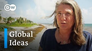 An invasion of brown algae in Mexico | DW Global Ideas - DEUTSCHEWELLEENGLISH
