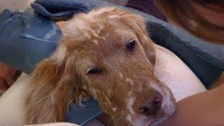 Rufus and a Tummy Full of Trouble - ANIMALPLANETTV