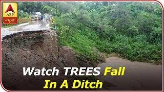 Shimla: Watch TWO TREES fall in a ditch as soil loosens post heavy rainfall - ABPNEWSTV