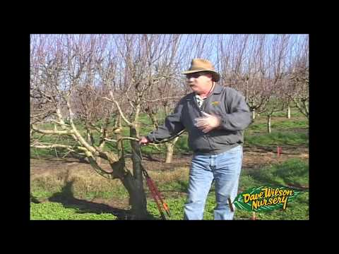 How To Graft A Fruit Tree