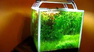 planted shrimp cube