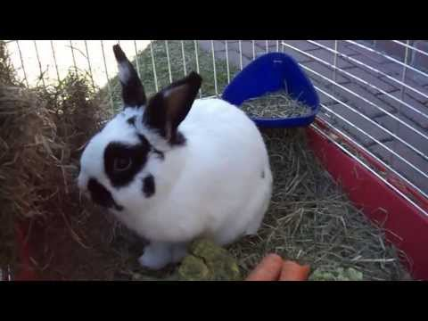 Cute bunny first time outside :)