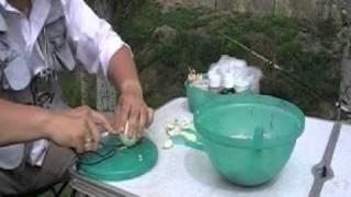 как правильно приготовить имбирный чай для похудения