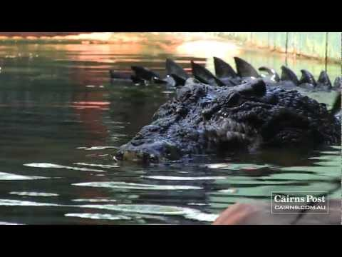 Cassius: The World's Largest Crocodile in Captivity - Marineland Melanesia, Green Island