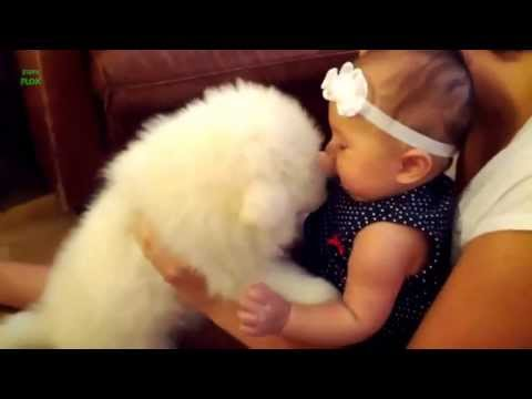 Animais engraçados e criança - 2013 / 2014