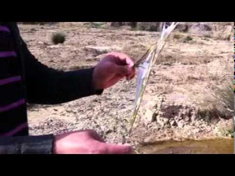صيد الحسون بالطريقة التقليدية