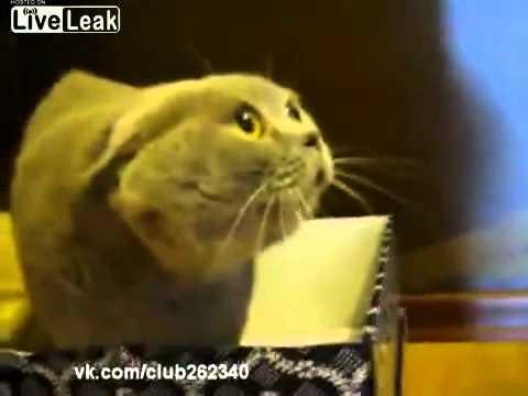 Mačka koja govori