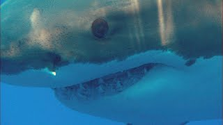 Hear This Man's Stunning Tale Of Surviving A Shark Attack | I Was Prey - ANIMALPLANETTV
