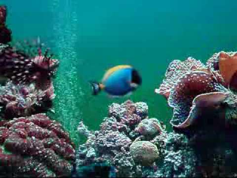 Aquarium ikan laut