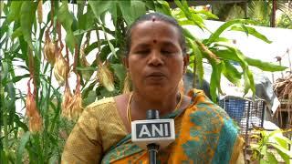 22 Jun, 2018: Rare medicinal flower starts blooming in southern India - ANIINDIAFILE