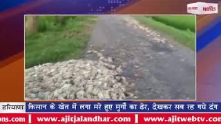 video : किसान के खेत में लगा मरे हुए मुर्गों का ढेर, देखकर सब रह गये दंग