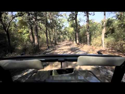 4 hour Tiger Safari in Bandhavgarh Tiger Reserve time lapsed to 3 minutes FRONT VIEW